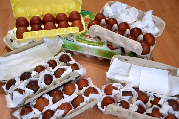 Прибытие конкурсных яиц кур породы Маран