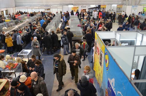 Выставка открылась, зрительский интерес огромен.
